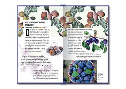 Pages intérieures de l'ouvrage La Prune